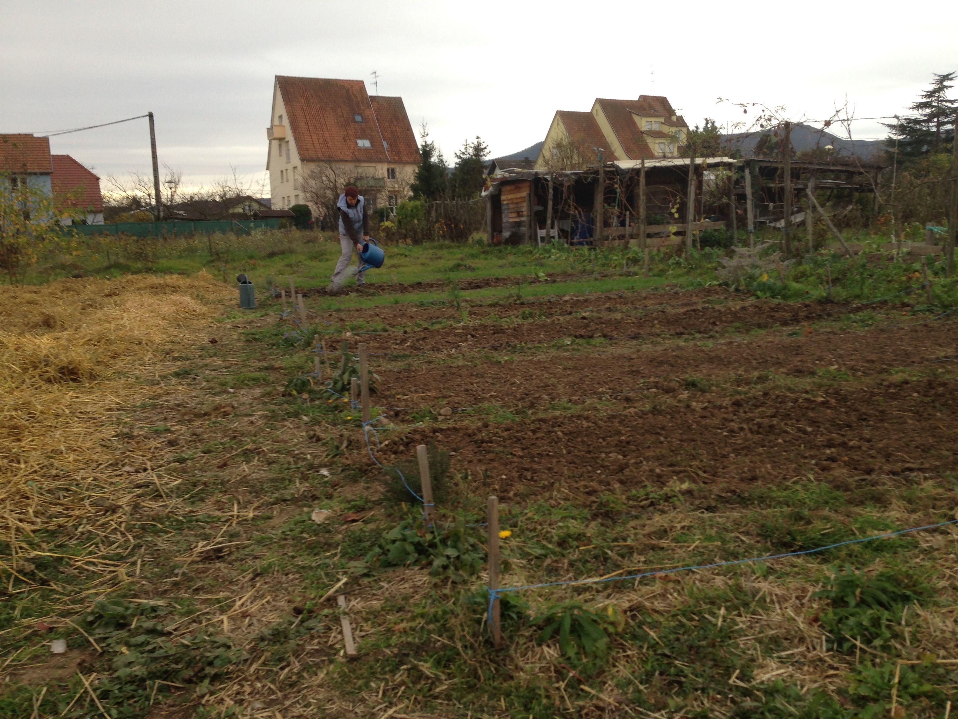 Travaux de jardinage des incroyables comestibles au jardin for Site de jardinage